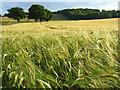 SU7999 : Farmland, Bledlow by Andrew Smith