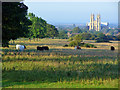 TA0238 : Beverley Westwood, common land by Peter Church