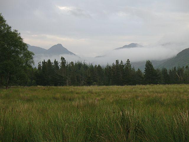 Damp fields, Ariundle