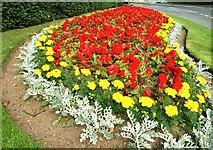 J5880 : Flowerbed, Donaghadee by Albert Bridge