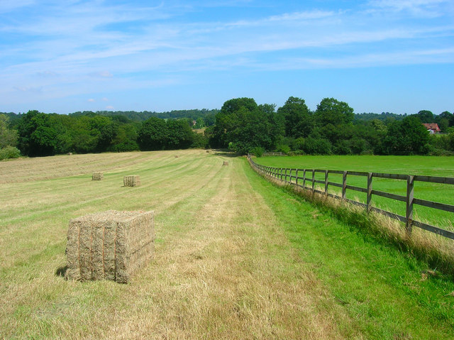 Hay Bales near Old Park Farm