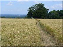 TQ1352 : Path Through the Wheat Field by Colin Smith