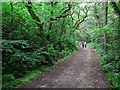 C0634 : Path, Ards Forest Park by Rossographer