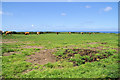 SW4840 : Cattle grazing, Trevalgan by Pierre Terre