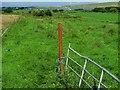 C0135 : Field near Casy Glebe by Rossographer