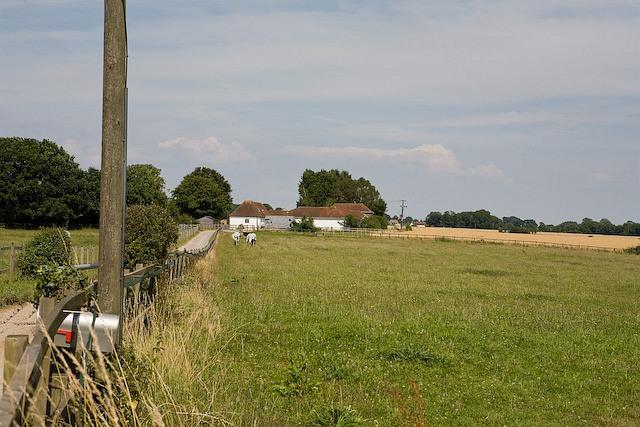 Rushmere Stud Farm, near Hambledon
