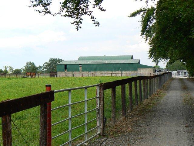 Rheindross Stud farm
