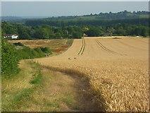 SU8789 : Farmland, Little Marlow by Andrew Smith