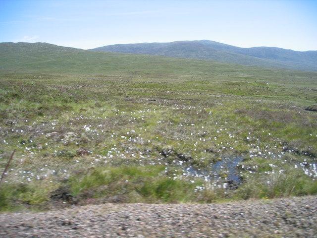 Rannoch Moor with cotton grass