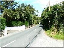 N9803 : Leafy regional road by James Allan