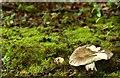 J4681 : Fungus, Crawfordsburn Glen (4) by Albert Bridge