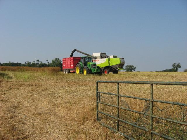 Rape seed harvest at Bellewstown, Co. Meath