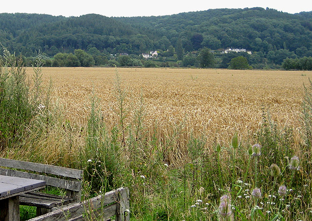 View across the wheat from Shipley Gardens