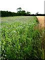 TF9106 : Generous nature strip beside wheat crop by Zorba the Geek