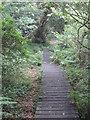 SW7633 : Boardwalk beside College Reservoir by Rod Allday