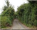 SU9889 : Mumfords Lane by David Hawgood