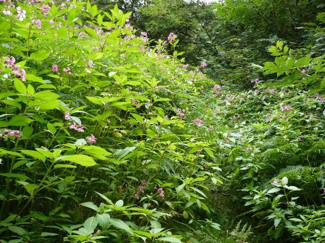 The Ripon Rowel long distance path