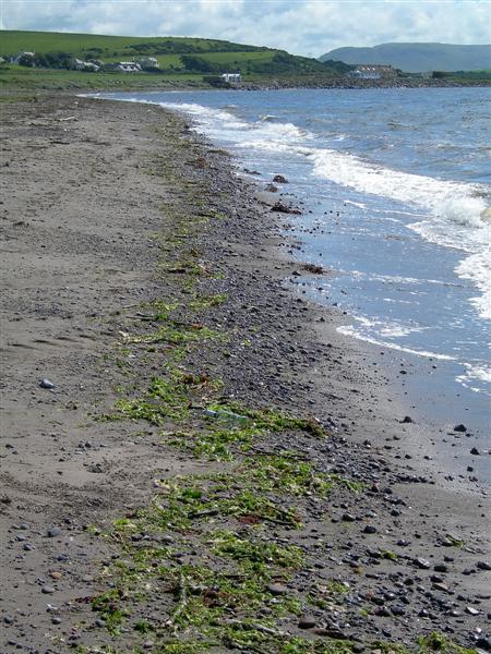 On Dipple Shore