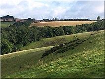 SX8460 : Field by Glazegate Lane by Derek Harper
