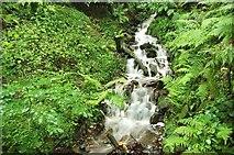 J4681 : Stream, Crawfordsburn Glen (4) by Albert Bridge