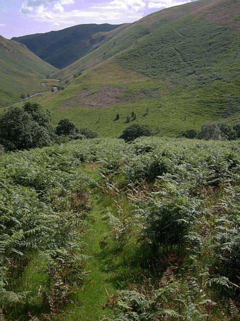 Bracken-covered slope in Cwm Doethie