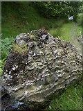 SN7751 : Sedimentary rock in Cwm Doethie by Rudi Winter