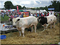 SO6286 : Exhibits at The Burwarton Show by Row17