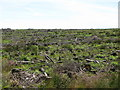 NY6475 : Cleared plantation on Hart Horn (2) by Mike Quinn