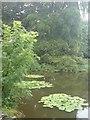 SM9618 : Waterlilies by Deborah Tilley