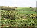 SW4333 : Fields by Tony Atkin