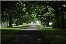 NO3847 : Avenue, Glamis Castle by Philip Halling