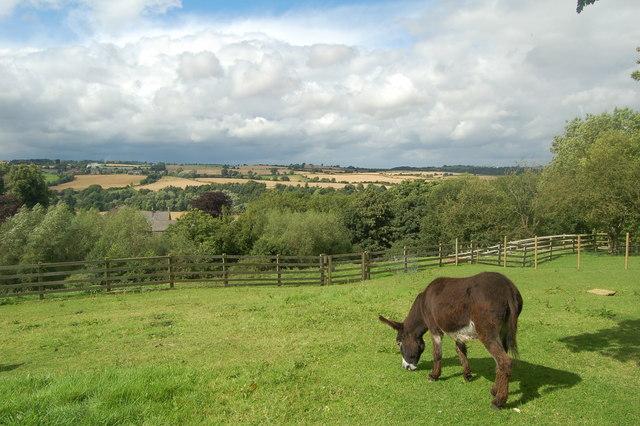 Tyne Valley, and donkey