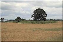 N4043 : Ring Fort by kevin higgins