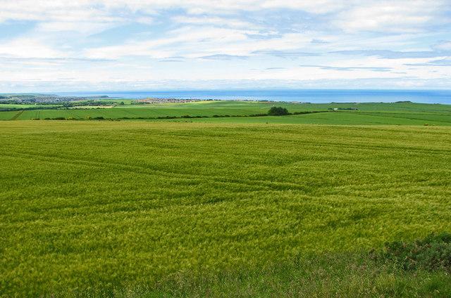 Grain fields with Banff Bay beyond