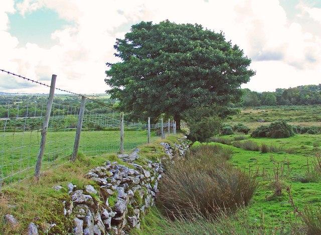 Boundary of the moorland: Blaenffynnon, Meline