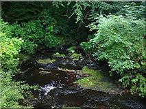 NU0702 : Stream, Cragside Estate by Chris Gunns