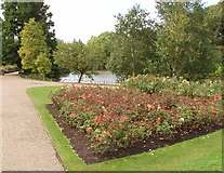 TQ2882 : Rose garden and lake, Queen Mary's Garden by David Hawgood