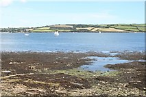 SW8234 : Foreshore at Penarrow Point by Rod Allday
