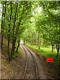 SK3455 : Down the Tram Track at Crich by Paul Collins