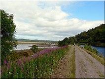NR7992 : The towpath by Bellanoch Basin by Rich Tea
