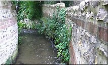 ST6601 : Mill Stream Cerne Abbas by Nigel Mykura