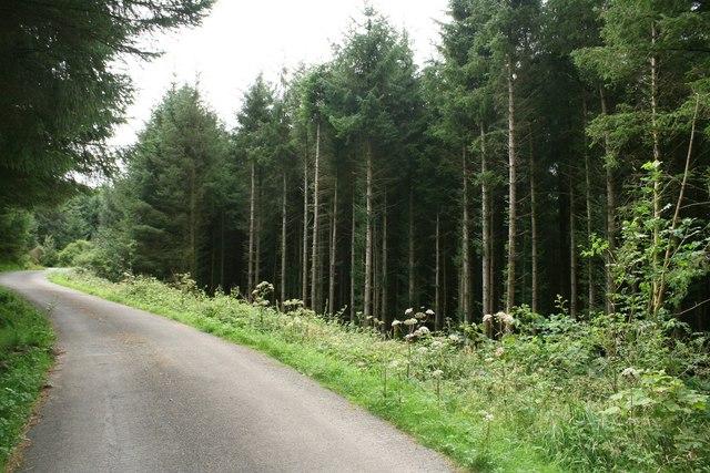 Road Through Woodland near Llan Ffestiniog