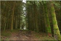 SH7140 : Forest Trackway near Llan Ffestiniog by Jeff Buck