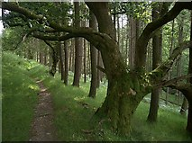 SN7648 : Cwm Doethie path by Rudi Winter