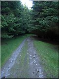 SN7848 : Dalarwen Forest track by Rudi Winter