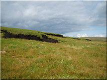 NY4714 : Hagg, Long Grain by Michael Graham