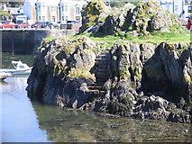 NW9954 : McCooks Craig in Portpatrick harbour by derek menzies