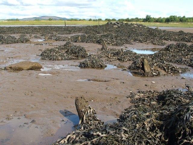 Dumbuck Crannog - remains of timber piles (north-east)