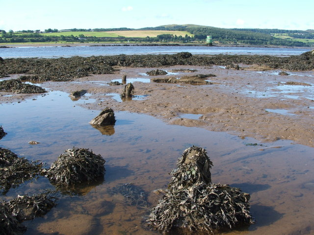 Dumbuck Crannog - remains of timber piles (south-east)