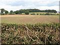 SO7729 : View towards Staunton Coppice by Pauline E
